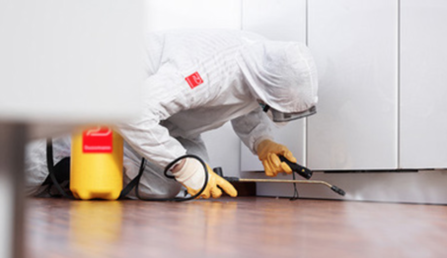 Domestic pest control services Health and safety